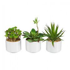 3 Pcs. Conjunto de Suculenta Planta Artificial 16-20 Cm en Cuenco de Cerámica
