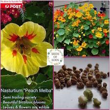 "5 NASTURTIUM ""Peach Melba"" Seeds(Tropaeolum majus); Beautiful yellow flowers"