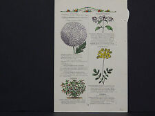 James Vick Seed Catalog Rocheter, N.Y. Flowers/ Vegetables, Hand Colored s#14