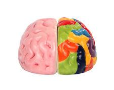 Left and Right Brains Magnetic Ceramic Salt and Pepper Shaker Set Decor Gift