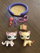 Littlest Pet Shop Lps Authentic Shorthair Cats #339 Brooke #852 Leopard cat