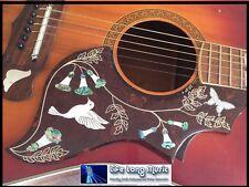 Guitarra Acústica Pickguard Colibrí J200 Paloma Kay Suzuki Alverez Colón