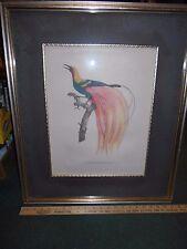 """Jacques Barraband """" Le Petit De Paridis Emeraude"""". Framed engraving 21 x 26"""