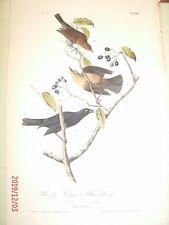 AUDUBON'S BIRDS of AMERICA - Plate 222 - RUSTY COW-BLACKBIRD