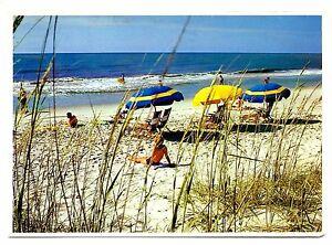 Hilton Head Island South Carolina Postcard Beach Umbrellas Sunbathers Posted 84
