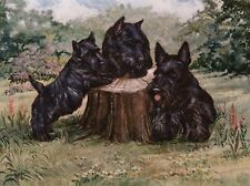 "SCOTTISH TERRIER SCOTTIE DOG ART LIMITED EDITION PRINT - ""Puppies on a Log"""