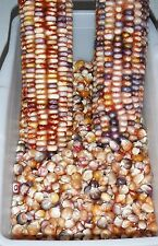 Heirloom INDIAN CORN Ornamental 250+ SEEDS Mixed colors