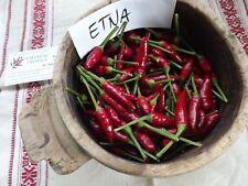 Etna Chili 5+ seeds