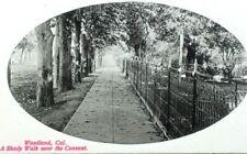 C.1910 A Shady Walk Near The Convent, Woodland, CA Vintage Postcard P51