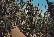 AK: Principauté de Monaco - Le Jardin Exotique dominant la Méditerranée