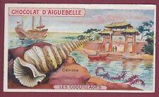 Chromo CHOCOLATERIE D'AIGUEBELLE - 230613 - coquillage - cérithe
