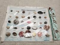 SEASHELL COLLECTION Newport Beach Oregon ocean beach sea shell fish marine life