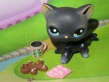 "Pet shop Chat Chaton Europeen * Petshop Kitty Cat # 994 "" NEUF ""+ Accessoires"