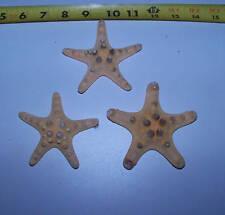 """1 NATURAL REAL KNOBBY STARFISH SEASHELLS crafts 3""""+ ITEM # NK3-1"""