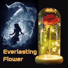 Wr Enchanted Rose Glass Dome Beauty And The Beast Led Light Christmas Gift Girls