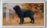 Cocker Spaniel Dog 75+ Y/O Ad Trade Card