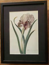 Mourning Iris by Ehret, 12''x16'' frame, botanical wall art, Flower wall art