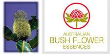 FIORI AUSTRALIANI Banksia Robur PERDITA VITALITA-INIZIATIVA/Entusiasmo-Gioia