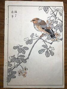 Japanese Woodblock Print Maekawa Bunrei Birds of Japan Red Bird #18