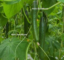 Telegraph, Continental Cucumber - Crisp, Tender & Beautiful - Australian Grown!!