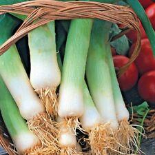 Vegetable Leek Musselburgh Min 600 seeds