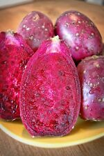 5 Seeds Maroon Fruit Prickly Pear Pad Cactus Opuntia ficus indica Nopal Tropical