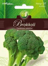 "BROCOLI "" Calabrese Natalino "", brassique Oleracea,légumes,chrestensen,PG2"