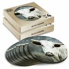 8 x Boxed Round Coasters - Young Texas Longhorn Cow #46528