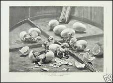 GRAVURE CONCOURS AGRICOLE POUSSINS ELEVAGE  1887