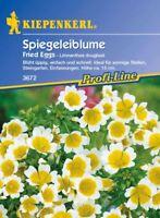 Kiepenkerl - Flor de Huevo Frito 3672 Fried Florece Exuberante Jardín Rocas