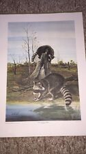 The Raccoons By Ralph McDonald 1972 S&N Lithograph Wildlife Print 796/1000