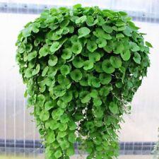 100pcs Dichondra Seed Dichondra Repens lawn Money Grass Hanging Decorative Garde