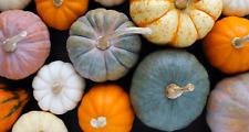 20 Seeds Pumpkin Pepitas Gourd Cucurbita Rare Vegetables Edible Organic Gardens