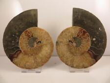 S.V.F - Madagascan Ammonite Cut pair - 12.9 cm - Free Stands
