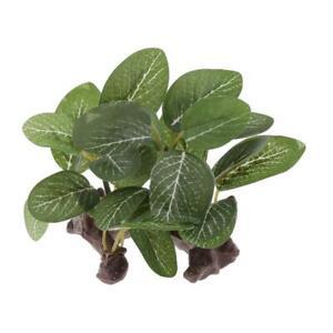 Terrarium Tank Plants Decorative Ornament for Reptiles and Amphibians Type 1