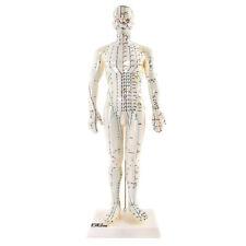 66fit Menschliches, männliches Akupunkturmodell – 50 cm