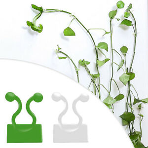 Invisible Plant Climbing Clips Vines Fixture Wall Fixing Sticky Clips Hook UK