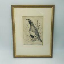GAMBELS QUAIL Signed Print REALISM Birds Ornithology