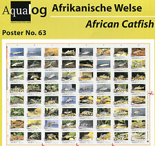 AQUALOG Poster African Catfishes, LAMINATED
