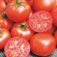 John Baer Heirloom Tomato 10 Seeds Moon Gardens Simply Grown Beautifully