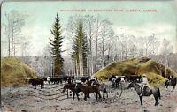 Vintage Edmonton Alberta Postcard, Winter on Farm, c1909. pb25