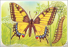 Grand porte-queue Papilio machaon Old World Swallowtail Butterfly IMAGE CARD 60s