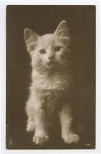 New listing c 1910 Cute Little Cat Kitten European photo postcard