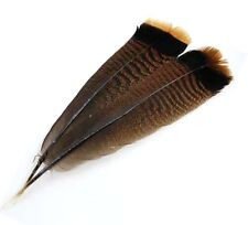 """Lot of Six 12"""" Banded Turkey Tail Feathers for Wicca Cleansing Smudging Prayers"""