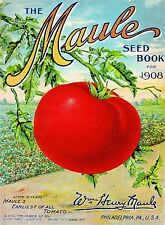 1908 Maule Tomato Vintage Vegetable Seed Packet Catalogue Advertisement Poster