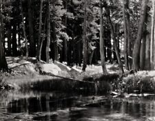 1921/63 Vintage LYELL FORK Merced River Landscape Photo Art ~ ANSEL ADAMS 11x14