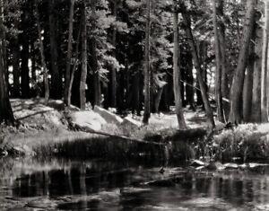 1921/63 Vintage LYELL FORK Merced River Landscape Photo Art ~ ANSEL ADAMS 11x14
