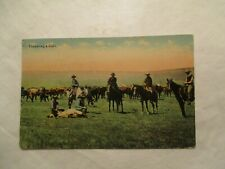 Throwing a Calf Cowboy Western 1913 Postcard