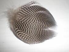 10 plumes flanc  montage mouche