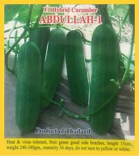 Asian Bangladeshi VEGETABLE CUCUMBER ABDULLAH F1 (GREENHOUSE) 35 SEEDS EASY GROW